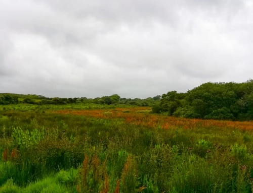 Invisible Narratives – Wetland walk with James Parkin